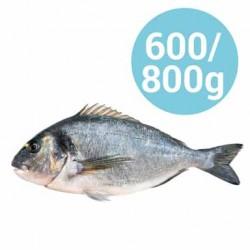 ORATE 600-800g